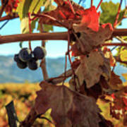Autumn In The Wine Country Art Print