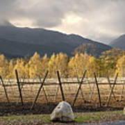 Autumn In The Winelands Art Print