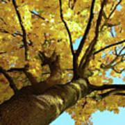Autumn Is My Favourite Colour Art Print
