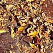 Autumn Is On The Way Art Print