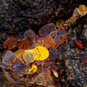 Autumn Jewels.. Art Print