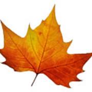 Autumn Leaf 1 Art Print