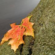 Autumn Leaf Study Art Print