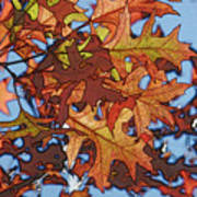 Autumn Leaves 17 - Variation  2 Art Print