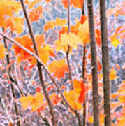 Autumn Leaves 2 Pdae Art Print