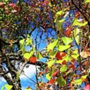 Autumn Leaves 243 L Art Print