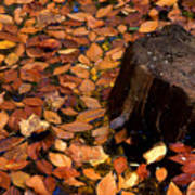 Autumn Leaves And Tree Stump Art Print
