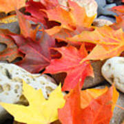 Autumn Leaves Art Print Coastal Fossil Rocks Baslee Troutman Art Print