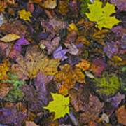Autumn Leaves At Side Of Road Art Print