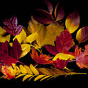 Autumn Leaves Art Print by Barry C Donovan