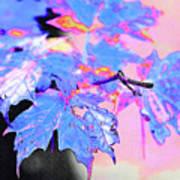 Autumn Leaves In Blue Art Print