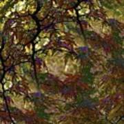 Autumn Leaves In Kyoto Art Print
