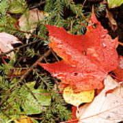 Autumn Leaves Art Print by Larry Ricker