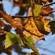 Autumn Leaves Macro 1 Art Print
