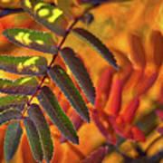 Autumn Leaves - Patagonia Art Print