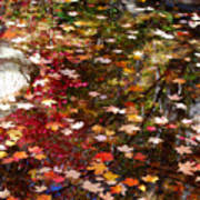 Autumn Leaves Reflections Art Print
