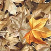 Autumn Leaves Series 2 Art Print