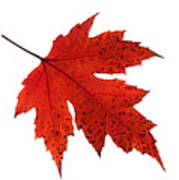 Autumn Leaves Triptych Art Print