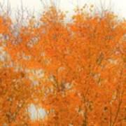 Autumn Leaves2 Art Print