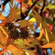 Autumn Leaves4 Art Print