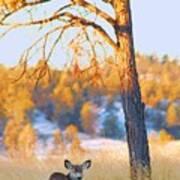 Autumn Light ... Montana Art Photo Art Print