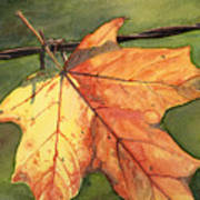 Autumn Maple Leaf Art Print