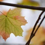 Autumn Maple Leaves Horizontal Art Print