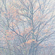 Autumn Morning Sugar Maple Art Print