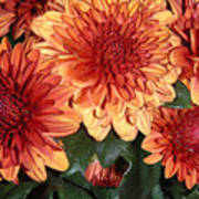 Autumn Mums - Touching Art Print