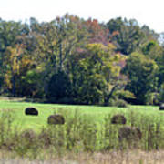 Autumn Pastures Art Print by Jan Amiss Photography