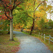 Autumn Path II Art Print