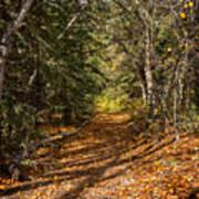 Autumn Path In Spearfish Canyon Art Print
