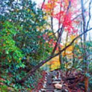 Autumn Pathway Art Print