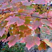Autumn Pink 2 Art Print