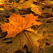 Autumn Quilt Art Print