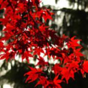 Autumn Red Art Print by Jeff Breiman