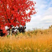 Autumn Red Maple Art Print