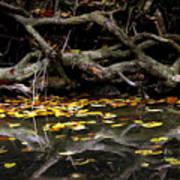 Autumn Reflection Art Print