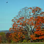Autumn Scene 2 Art Print