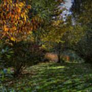 Autumn Shadows Art Print