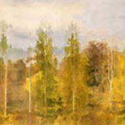 Autumn Shear Poplars Art Print