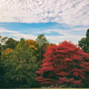 Autumn Skies Art Print