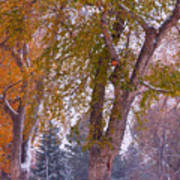 Autumn Snow Park Bench   Art Print by James BO  Insogna