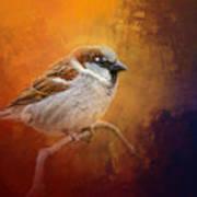 Autumn Sparrow Art Print