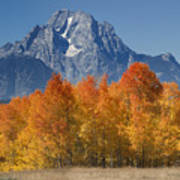 Autumn Splendor In Grand Teton Art Print