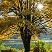 Autumn Splendour Art Print