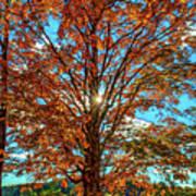 Autumn Star- Paint Art Print