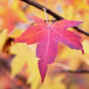 Autumn Still Art Print