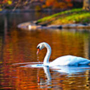 Autumn Swan Lake Art Print
