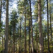 Autumn Tranquil Forest Art Print